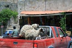 Schafe auf rotem Packwagen Stockfoto
