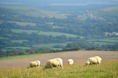Schafe auf Weg, Swyre-Kopf Lizenzfreie Stockfotos