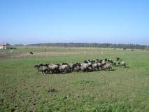 Schafe auf Weide Lizenzfreie Stockbilder