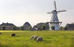 Schafe auf Weide durch Windmühle im Sommer lizenzfreie stockfotografie