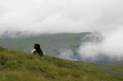 Schafe in den Bergen Stockbild