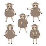 Schafe in den verschiedenen Haltungen Stockfotografie