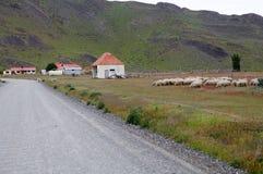 Schafe an der Ranch im Patagonia in Magallanes-Region, Süd-Chile lizenzfreies stockbild