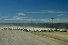 Schafe, die über geöffnete Reichweite sich bewegen Stockfotografie