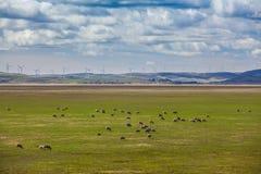Schafe, die auf Ackerland mit Windkraftanlagen im Hintergrund weiden lassen Lizenzfreie Stockfotos
