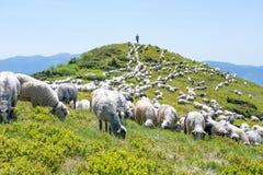 Schafe, die auf den Steigungen des Ukrainers Karpaten weiden lassen Stockfotografie