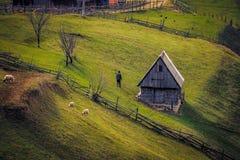 Schafe, die auf einem Hügel nahe einem Zaun und einem kleinen Haus bei Sonnenaufgang und einem alten Mann mit der Rückseite auf K lizenzfreies stockfoto