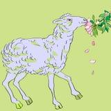 Schafe, die Blumen essen Stockbild