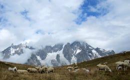 Schafe, die in den Alpen weiden lassen Stockfoto