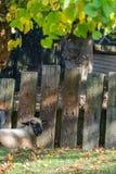 Schafe, die in einem Schatten stillstehen lizenzfreie stockbilder
