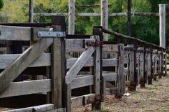 Schafe, die Federn sortieren Stockfoto