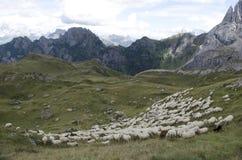Schafe, die im Berg weiden lassen Lizenzfreie Stockfotografie