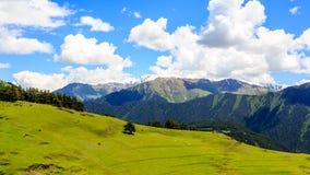Schafe, die im grünen Tal im Kaukasus weiden lassen Georgia, Tusheti lizenzfreie stockbilder