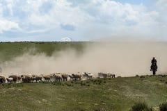 Schafe, die in Xinjiang übertragen Lizenzfreies Stockbild