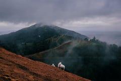 Schafe an einem stürmischen Wintertag als tiefer Wolke und Nebel bedecken die Malvern-Hügel stockfotografie