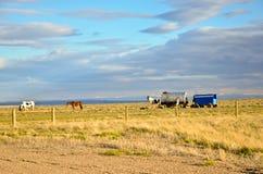 Schafe Hearder Lastwagen und Pferde Stockfoto