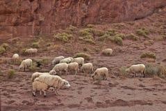 Schafe im Denkmal-Tal stockbilder