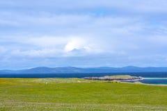Schafe im fieldf von Iona im inneren Hebrides, Schottland Lizenzfreie Stockfotografie