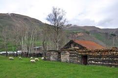 Schafe im georgischen Bergdorf Stockbilder