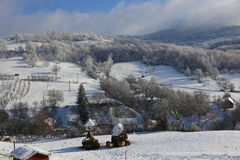 Schafe im Schnee Lizenzfreie Stockfotografie