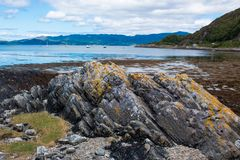 Schafe Loch sunart Schottland Vereinigtes Königreich Europa stockbilder