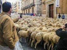 Schafe in Madrid Stockfotos