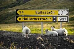 Schafe stehen unter Signpost still Stockfotografie