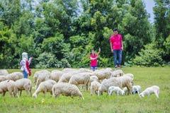 Schafe und Besucher Stockbilder