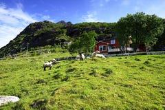 Schafe und das Haus Lizenzfreie Stockfotografie