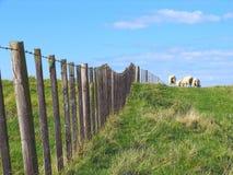 Schafe und Glassland Stockbild