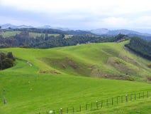 Schafe und Glassland Lizenzfreies Stockfoto