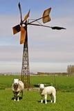 Schafe und Lamm Lizenzfreie Stockfotos
