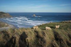 Schafe und Meer stockfotografie