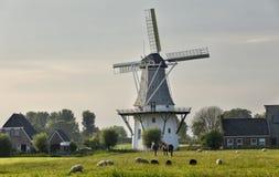 Schafe und Pferde auf Weide durch Windmühle lizenzfreie stockfotografie