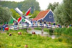 Schafe und Windmühlen in Zaandam lizenzfreies stockfoto