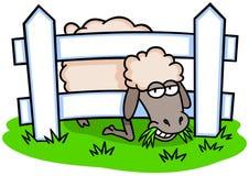 Schafe und Zaun Stockfotos