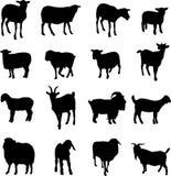 Schafe und Ziege von auf der ganzen Erde Stockbild