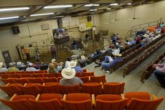 Schafe versteigern, San Angelo, TX, US Lizenzfreies Stockfoto