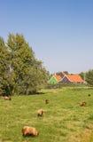 Schafe vor einem typischen niederländischen Holzhaus Lizenzfreie Stockfotos