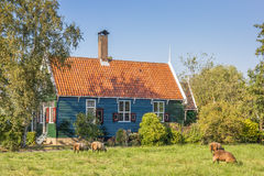 Schafe vor einem typischen niederländischen Holzhaus Lizenzfreies Stockfoto
