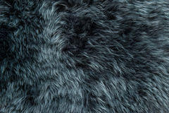 Schaffellwolldecken-Hintergrundbeschaffenheit des Schafpelzes graue Stockfoto