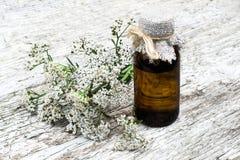 Schafgarbe (achillea millefolium) und pharmazeutische Flasche Stockfoto
