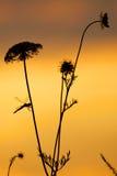 Schafgarbe in der Sonne Stockfotos