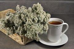 Schafgarbe-Tee Stockfoto