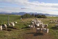 Schafhürde in Island Stockbild