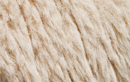 Schafhaut Hintergrund Stockbild