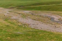Schafherde, die in einem Hügel auf einer grünen Wiese, Israel weiden lässt Lizenzfreie Stockfotografie