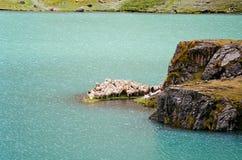 Schafscheren auf einer Insel Stockfotografie