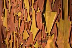 Schale der Barke auf einem Arbutus-Baum Lizenzfreies Stockbild