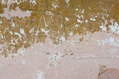 Schale der roten und rosa Farbenwand Lizenzfreies Stockfoto